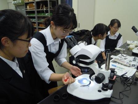 胚にアドレナリン溶液を滴下する。